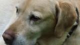 Ein Hundeleben ist teuer, aber jeden Cent wert